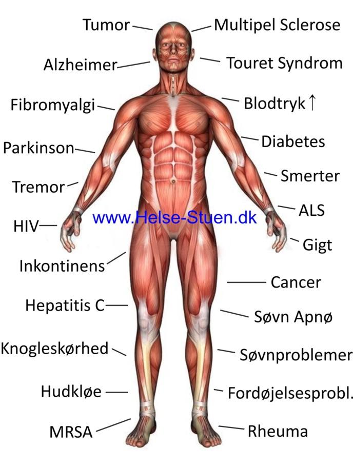 Med www.Vegatesting.dk kan du finde kroppens ubalancer samt midler, der kan modvirke disse.